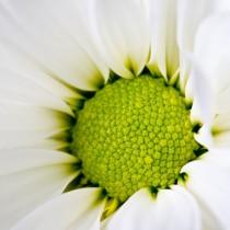 White Flower sq diy kitchen glass splashback