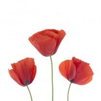Poppies sq diy kitchen glass splashback