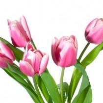 Pink Tulips sq diy kitchen glass splashback