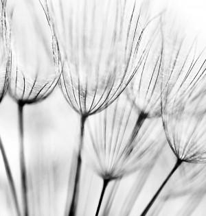 Dandelion diy kitchen glass splashback