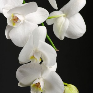 White Orchid sq diy kitchen glass splashback