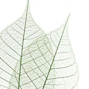 Skeleton Leaves sq diy kitchen glass splashback